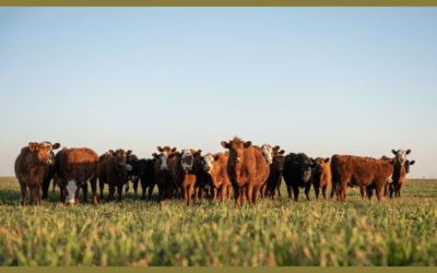 The Agriculture Improvement Act of 2018 – Part 1